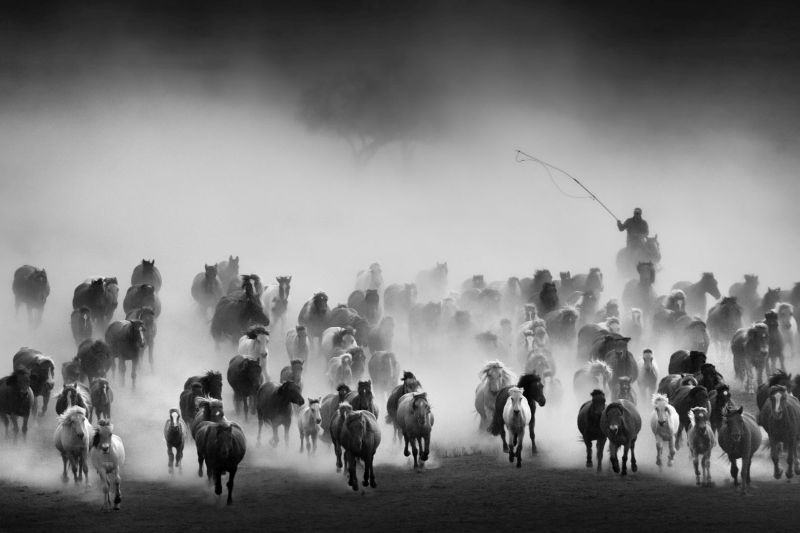 Ten Thousand Steeds Gallop, Xu  Jinan , China