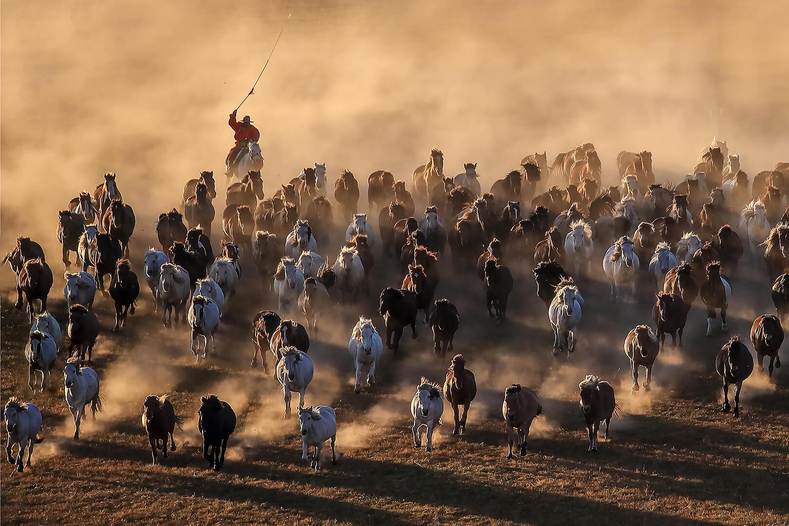 Kwong Ying Au-Yeung Horse Galloping 07