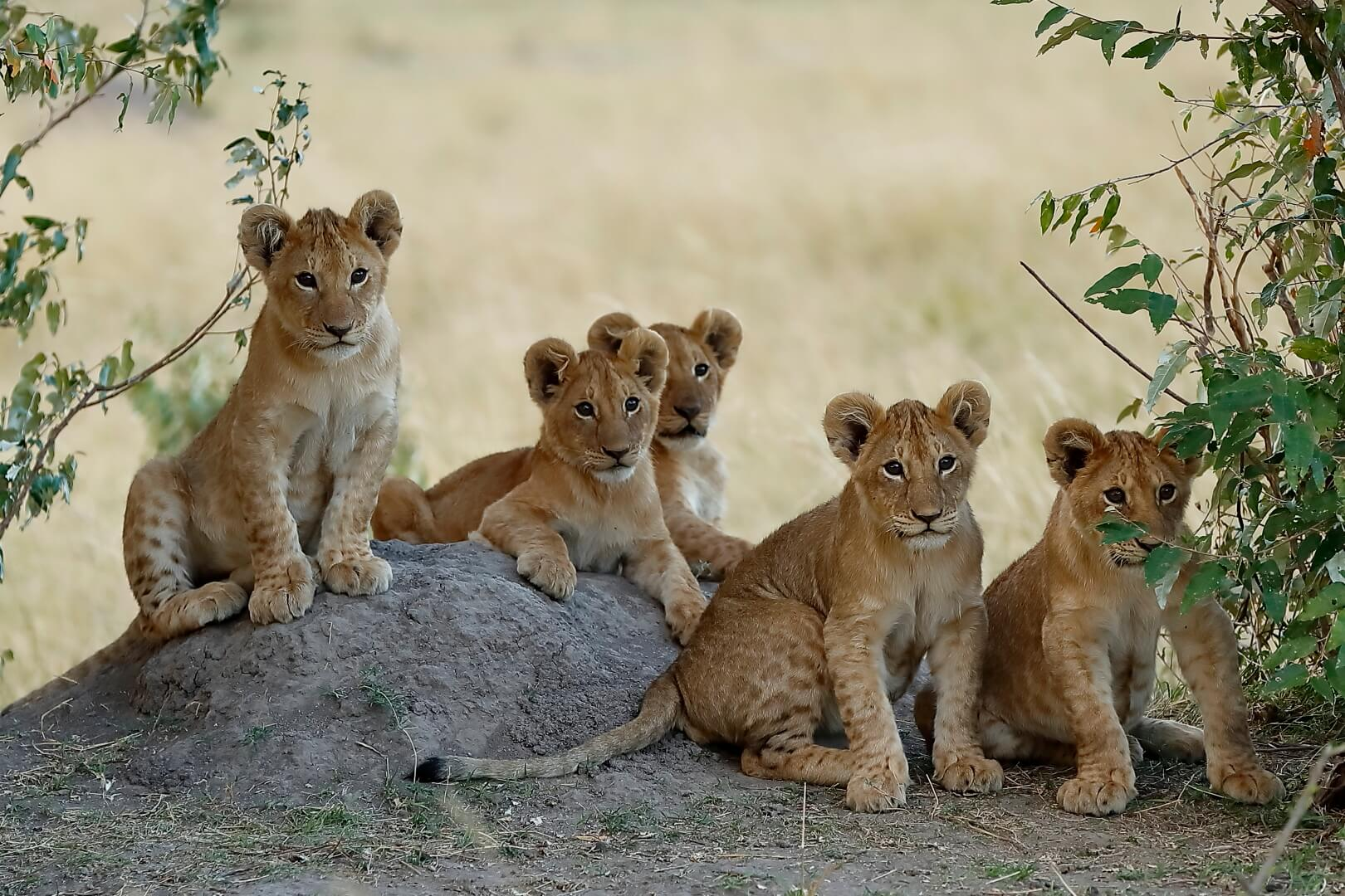 Shreyas Rao Group Photo