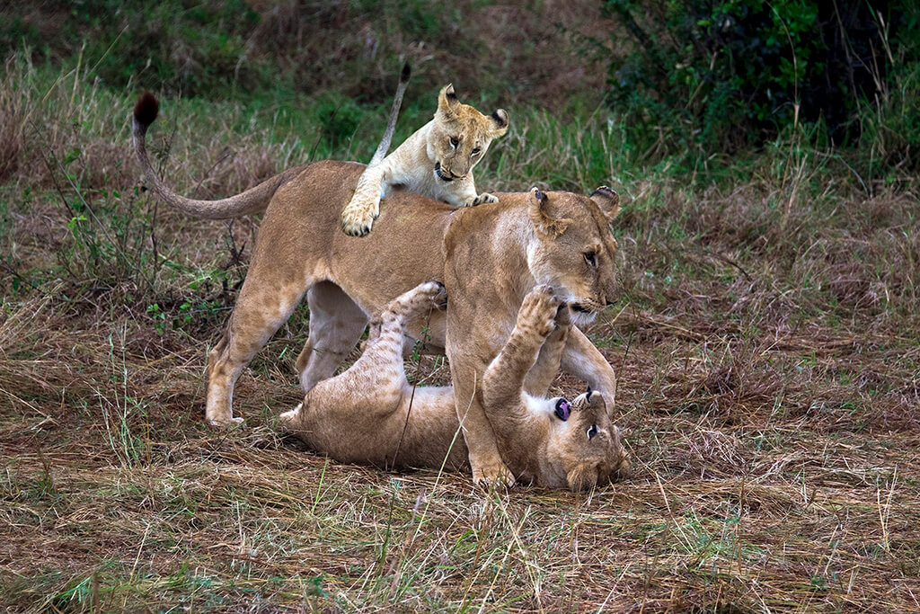 VIJAY RAWALE PLAYING WITH CUBS